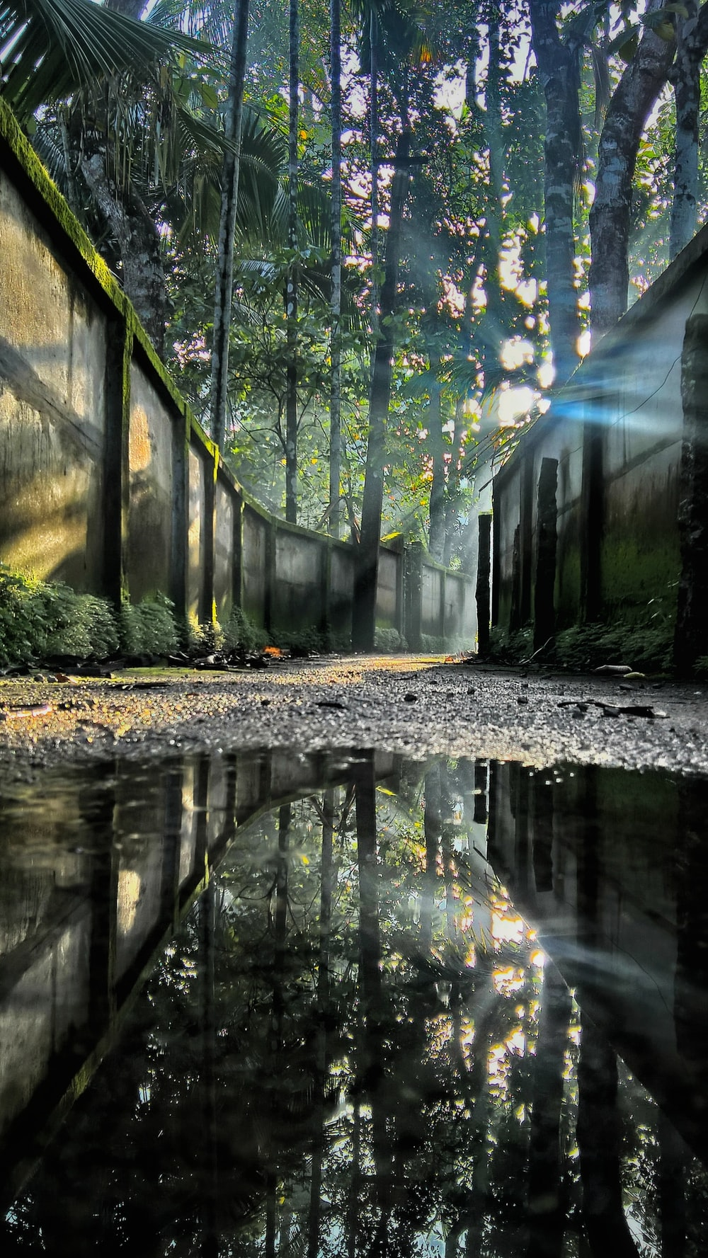 puddle near concrete walls and trees
