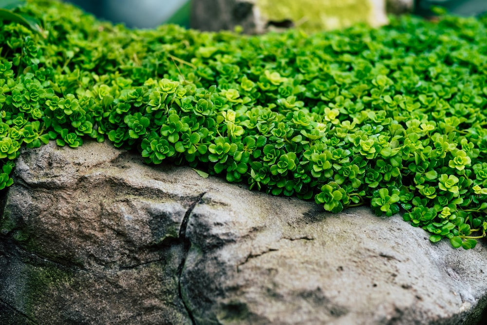 green plants on gray rock