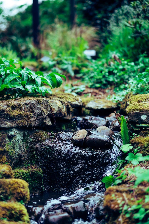 waters flowing on rocks beside leaves during day