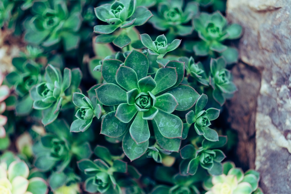 shallow focus photo of green plants