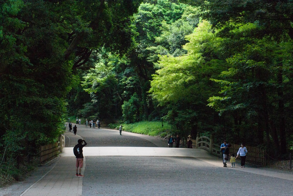 people walking at sidewalk by tree during daytime