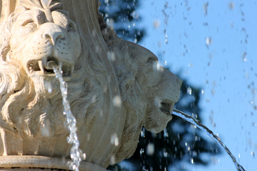 white concrete lion water fountain in time-lapse photography