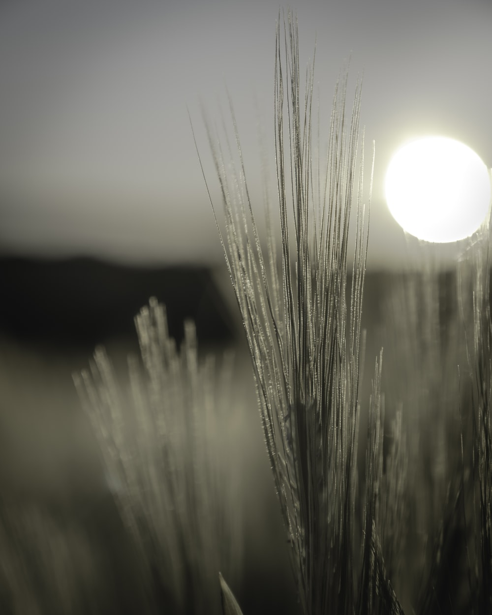 selective focus photography of grasses