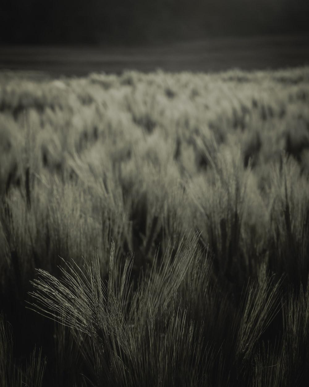 greyscale grass field photo
