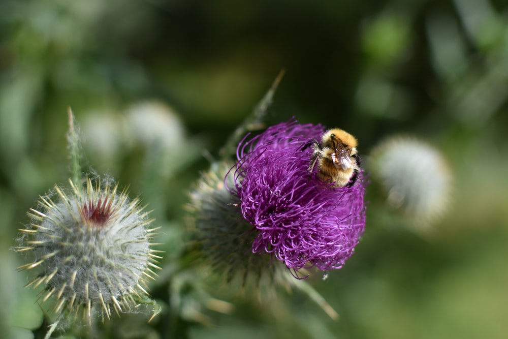 selective focus photography of bee on top of flower