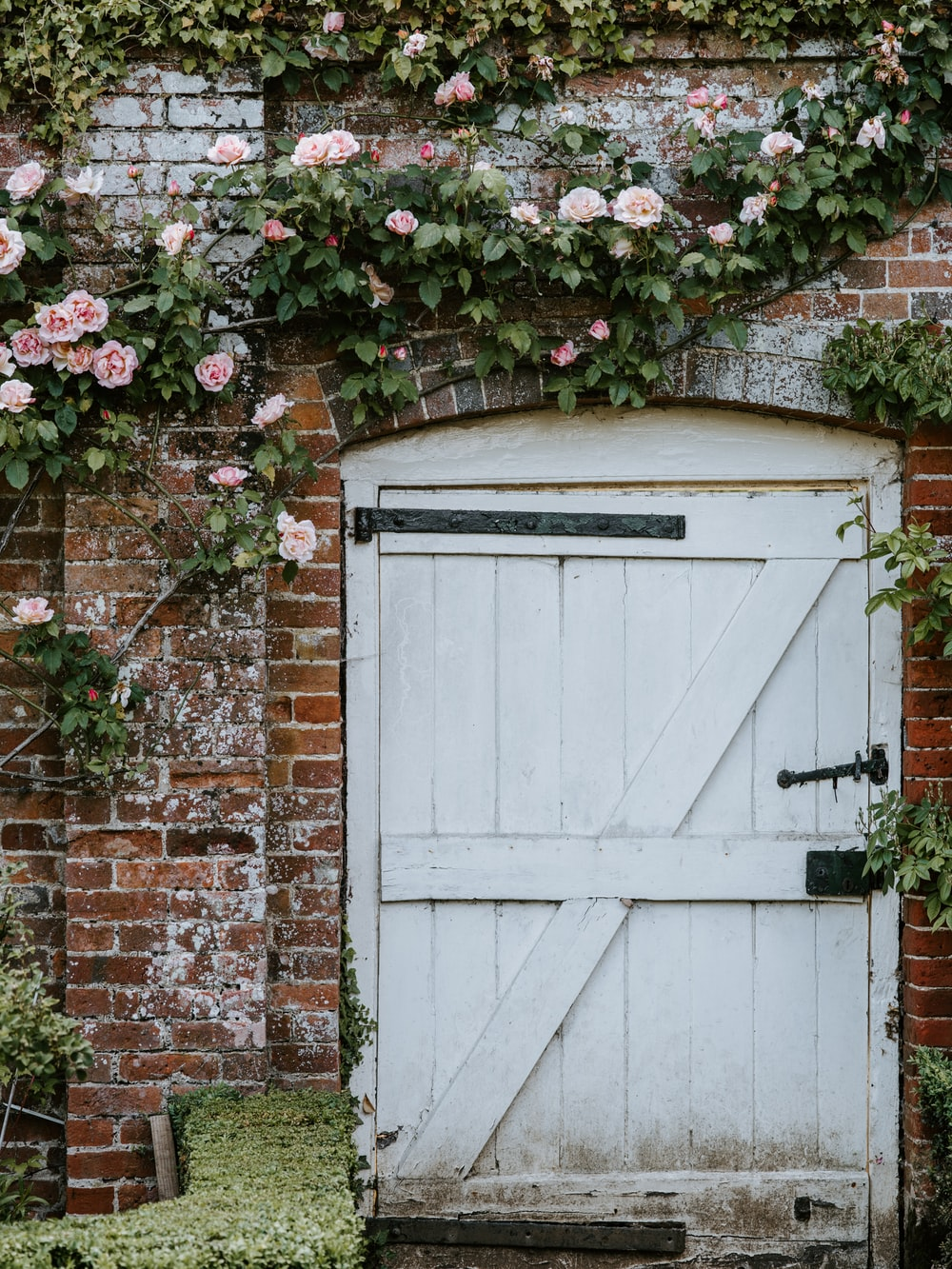 white wooden door surrounded by pink rose vines