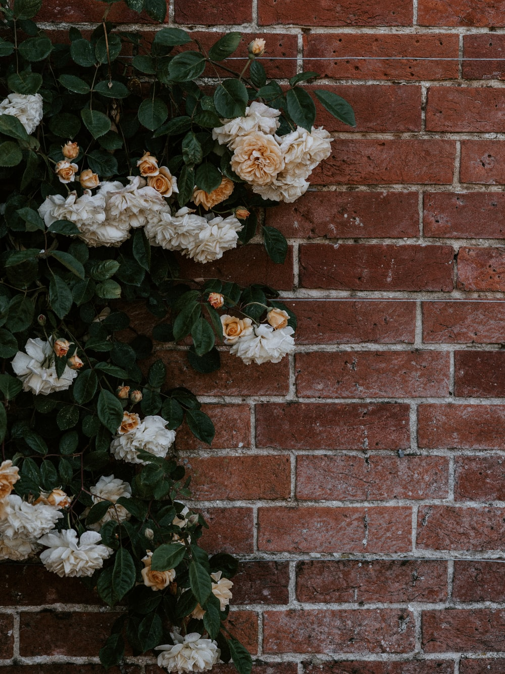 white and brown floral on brick wal