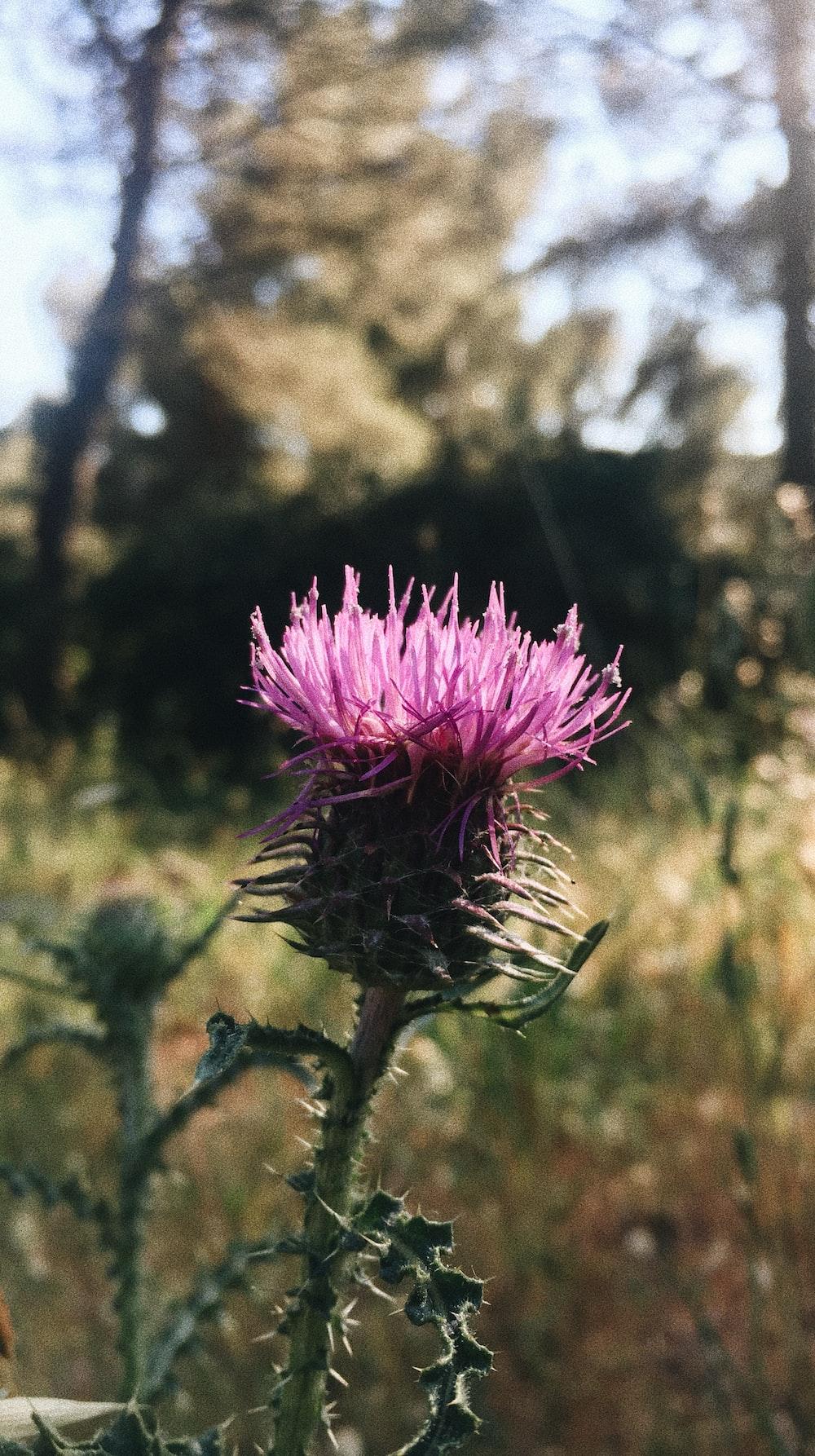 purple-petaled flower selective focus photography