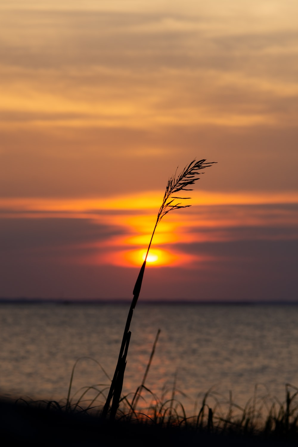 selective focus photo of grasses beside sea