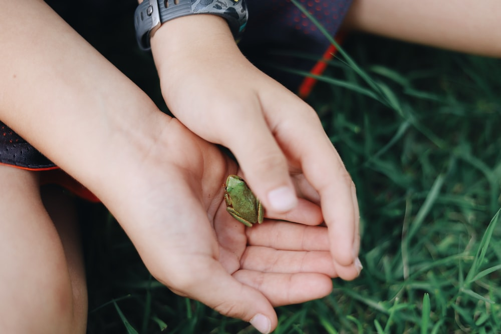 person holding tree frog