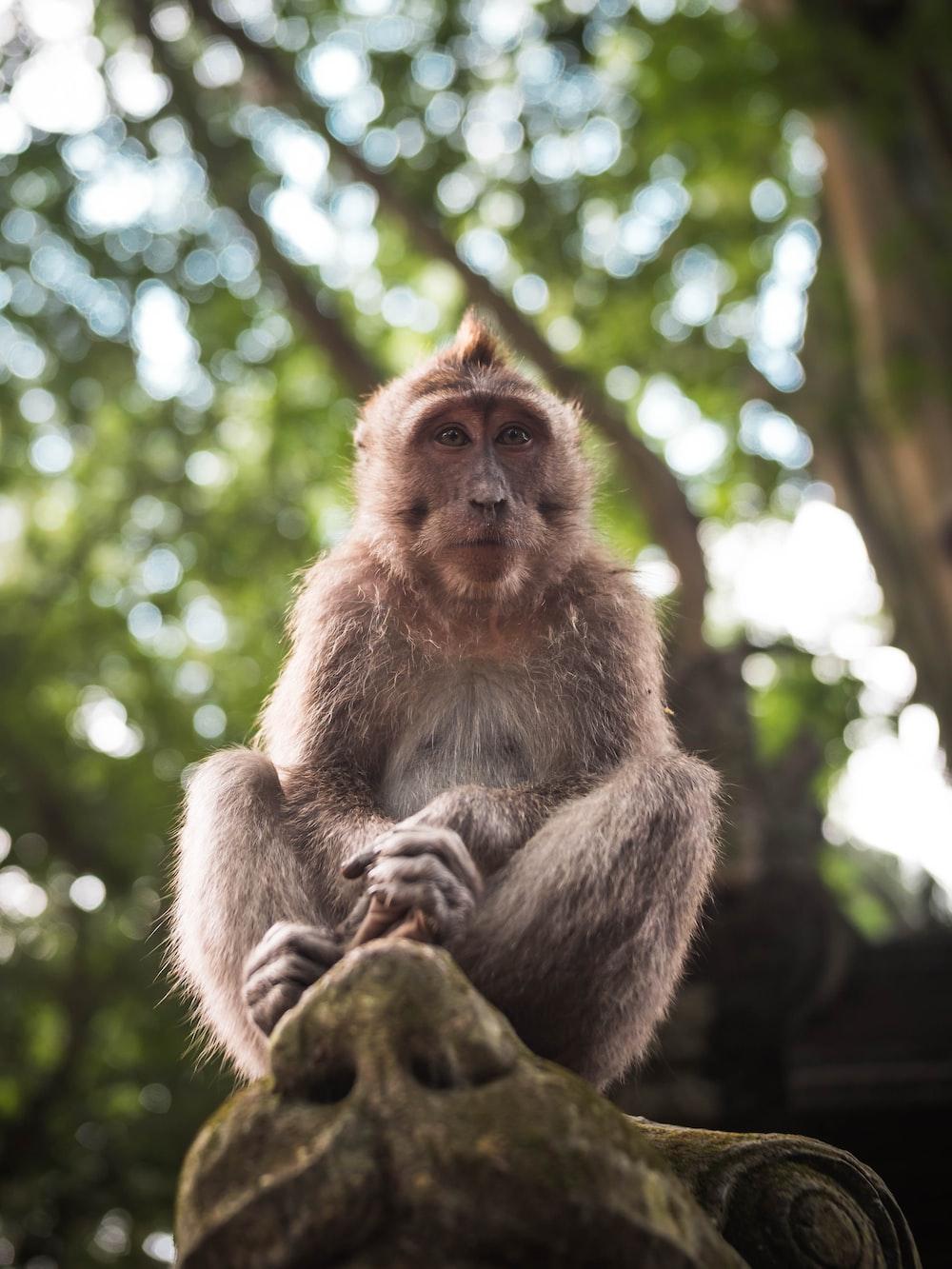 selective focus photo of monkey on tree
