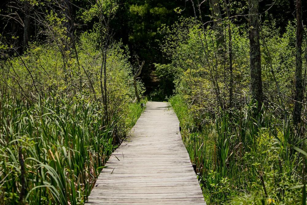 brown wooden pathway beside green grass