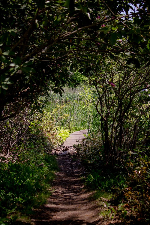 pathway in between shrubs