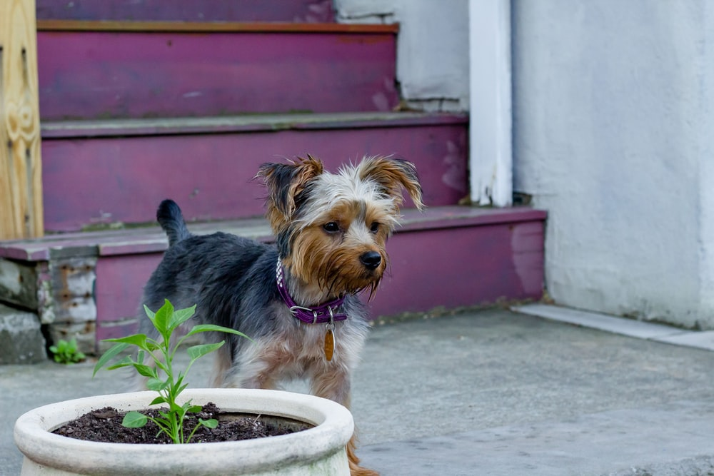 black and brown dog beside plant pot