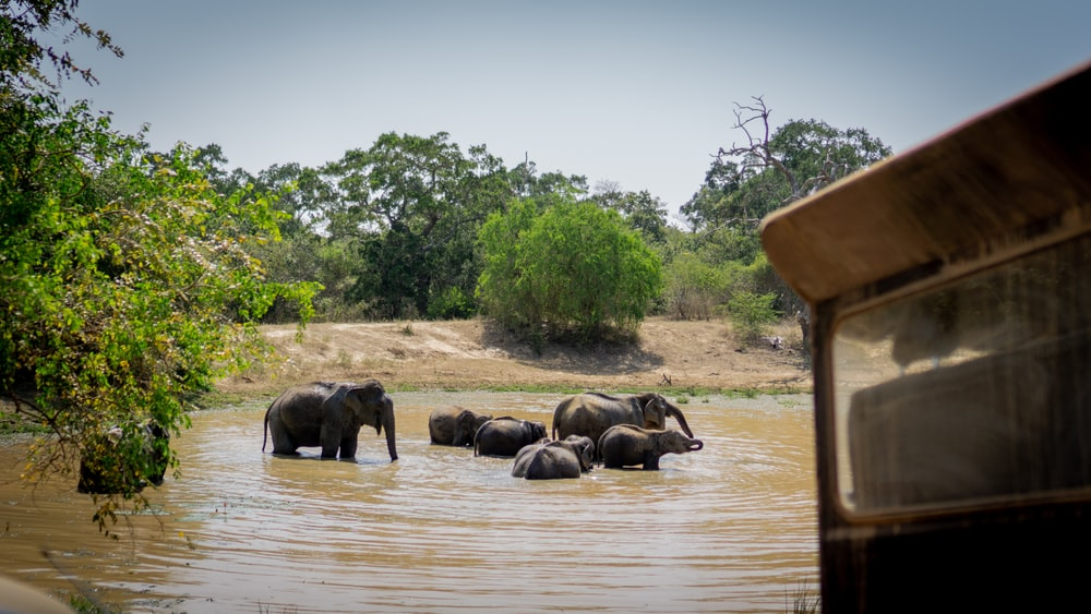 close-up photography of group of elephant on body of water