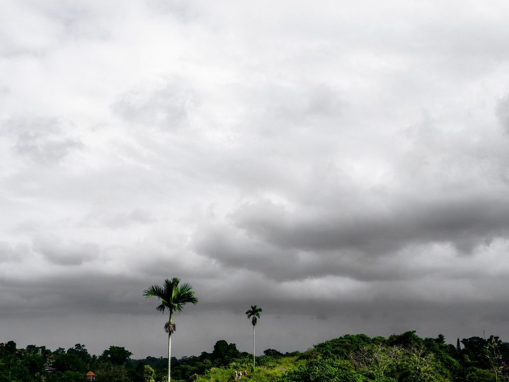 green palm tree across thick white clouds
