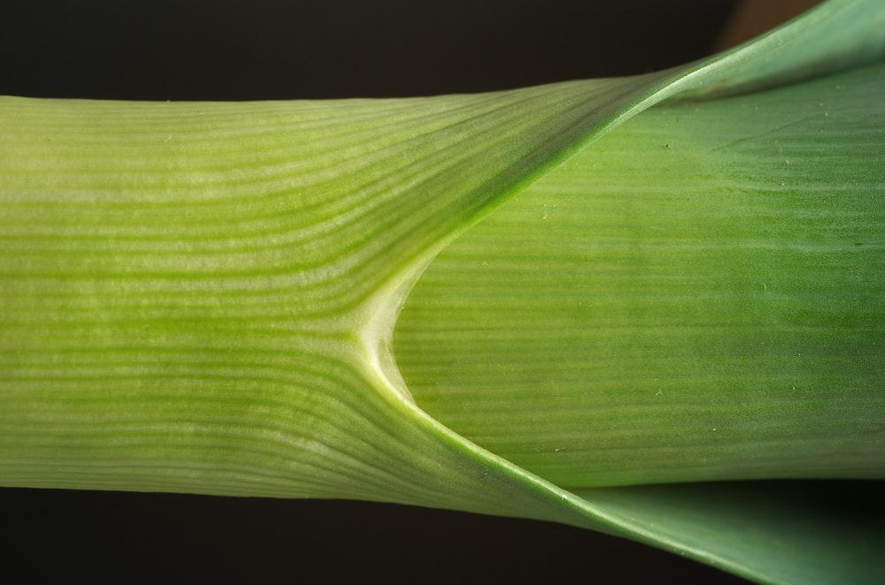 green plant's stem