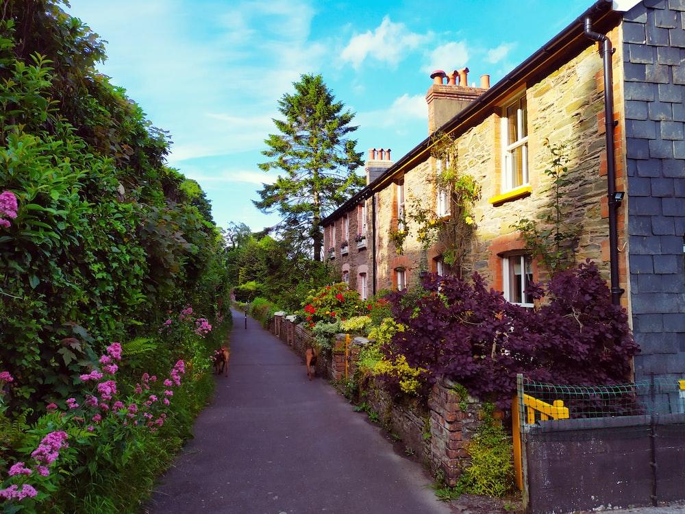 multicolored garden pathway