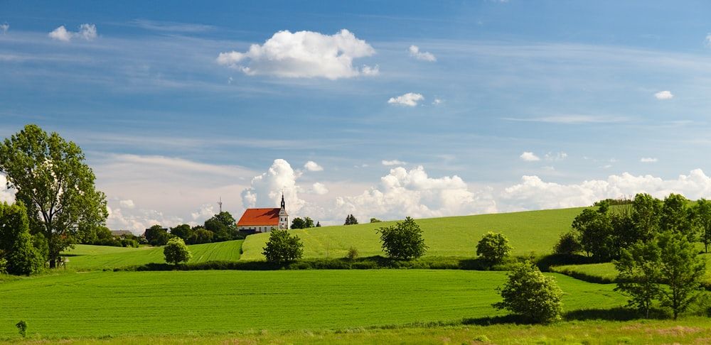 green grass field with bush plant scenery