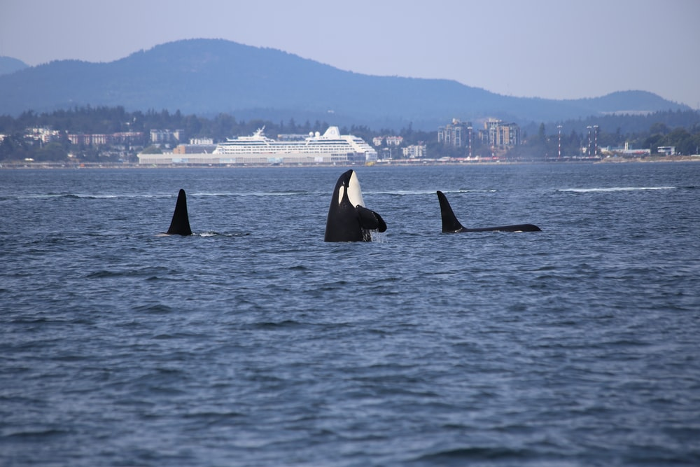 whales on body of water