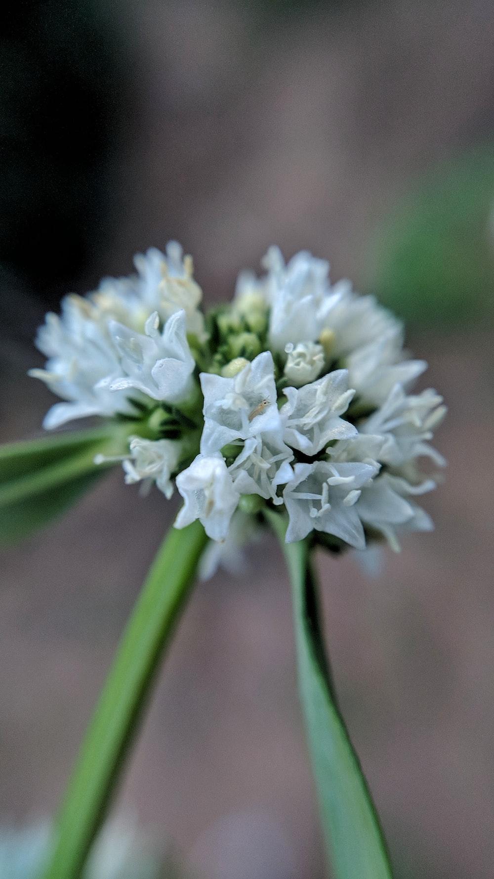 white flower focus photo