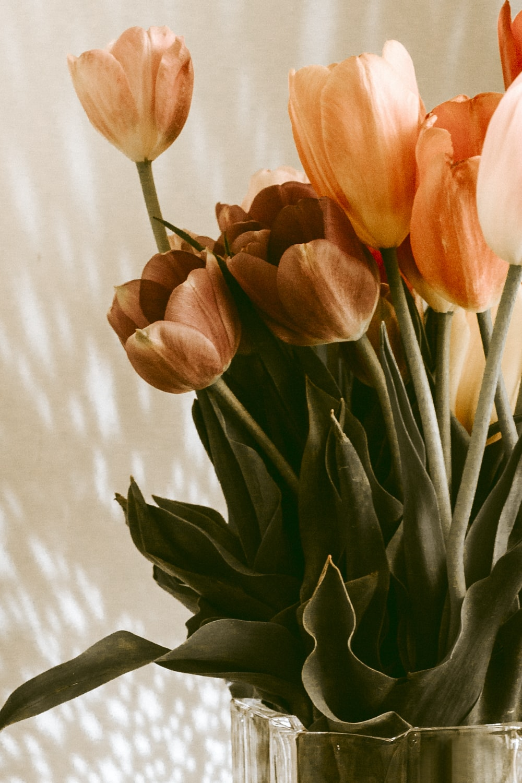 orange tulips flowers in vase