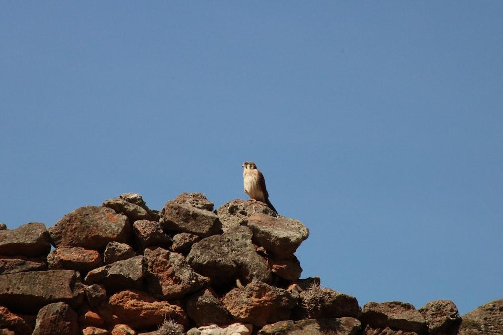 grey bird perching on grey rocks under blue sky