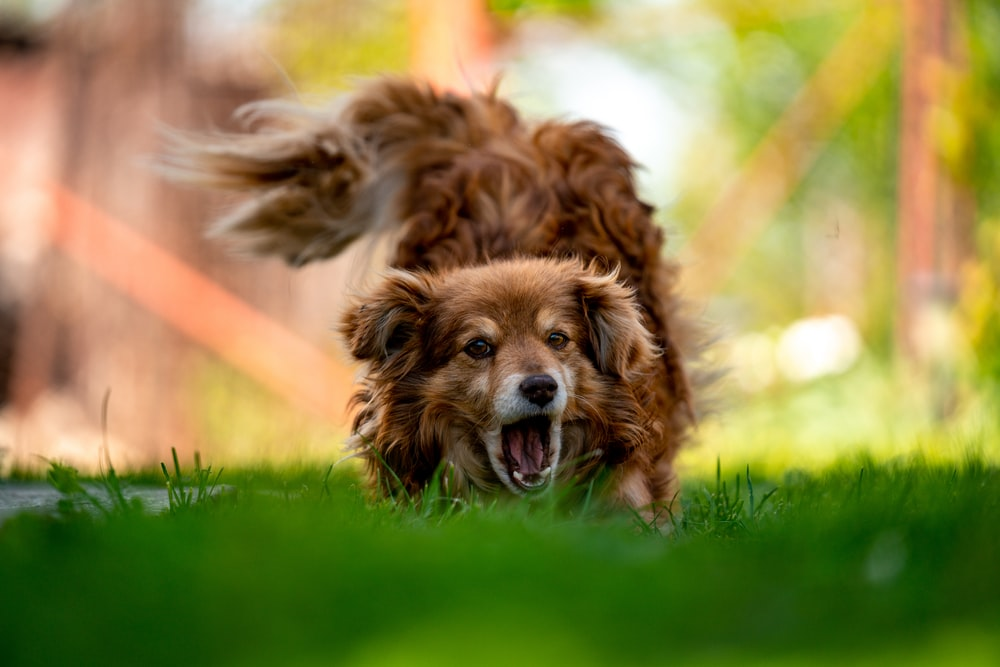 time lapse photography of running dog