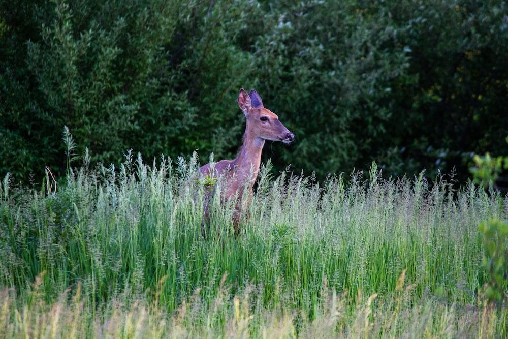 brown deer in green field near trees