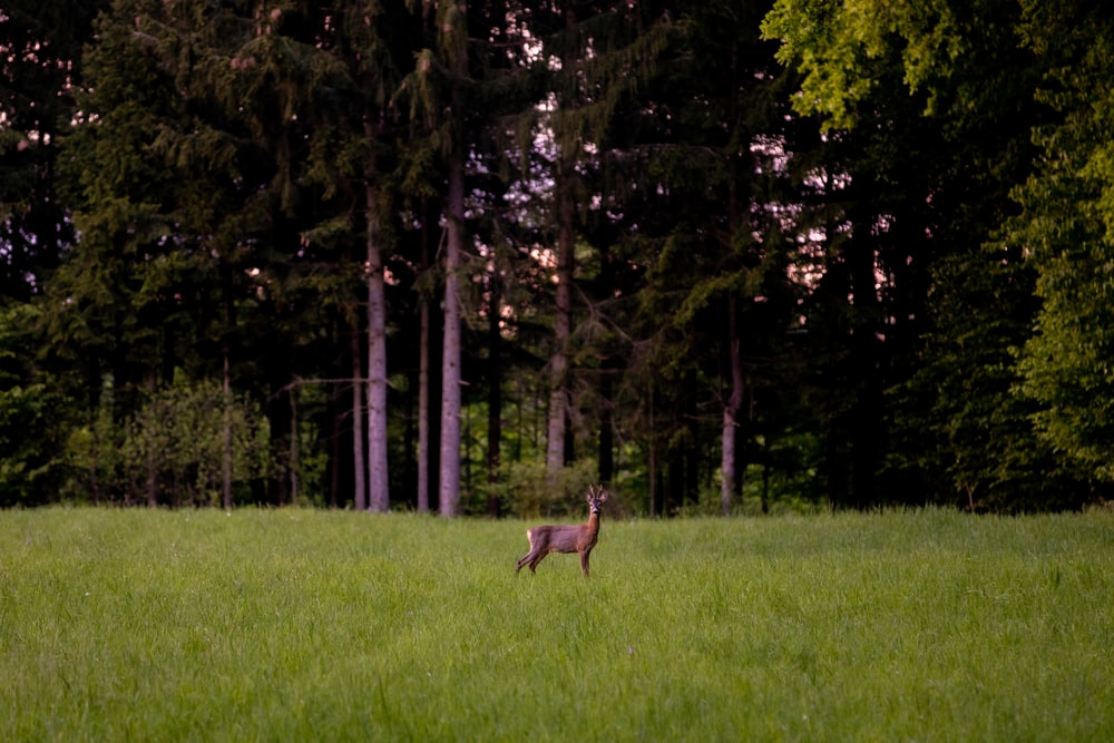 brown deer surrounded by green grass