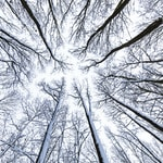 low angle photo of tall bare trees during daytime