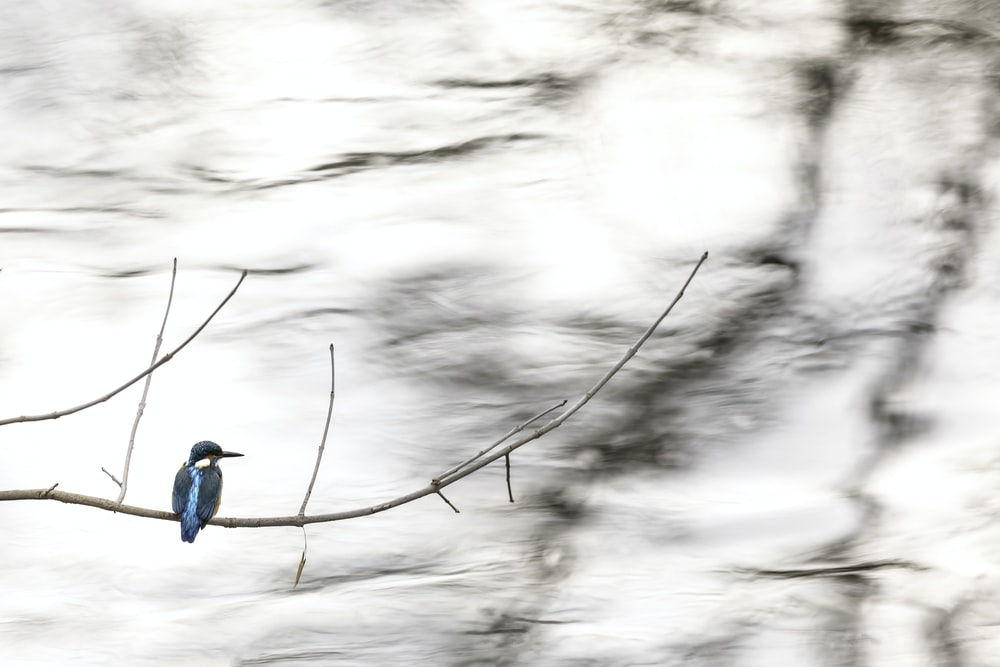 shallow focus photo of blue bird on tree branch