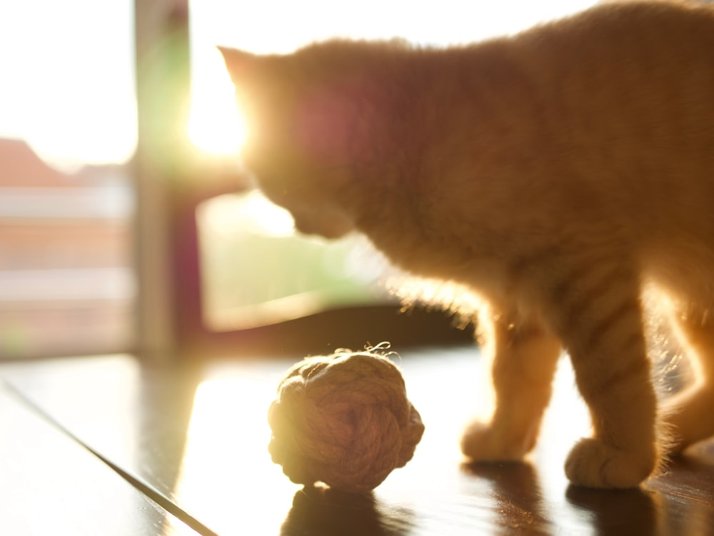 orange tabby cat with rope ball during daytime