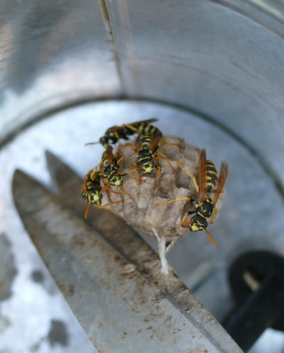 wasp`s nest on  scissors in a tin bucket