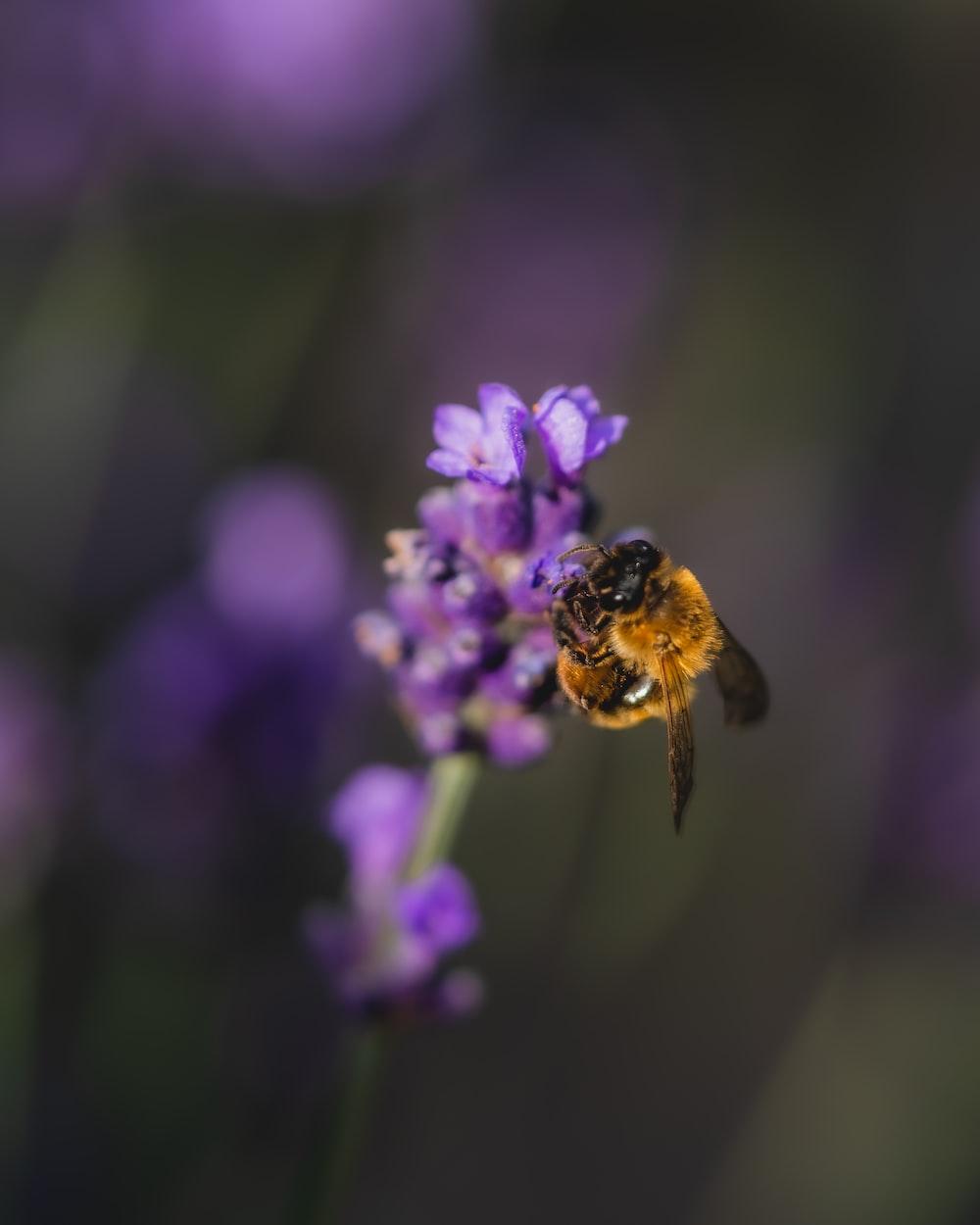 yellow bumblebee