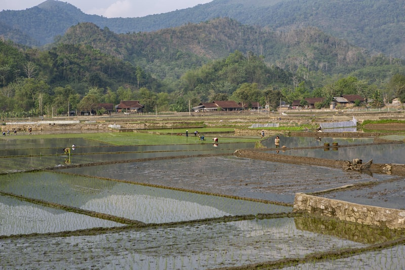 water and land planted with rice