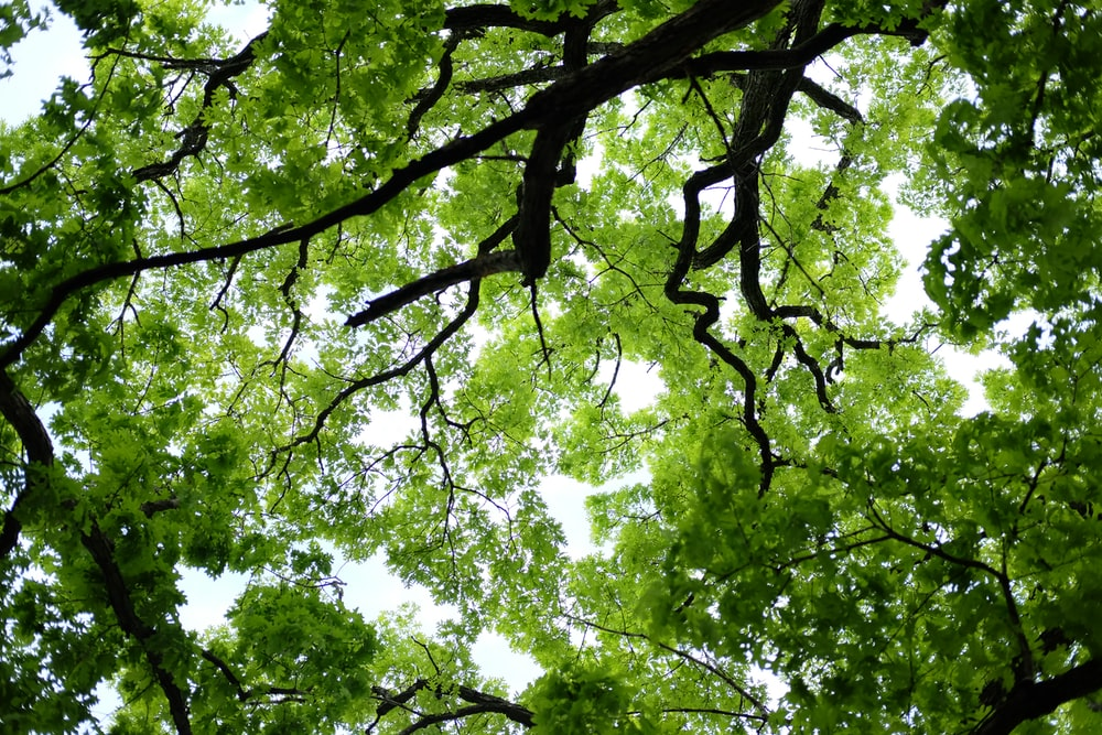 photo of green trees