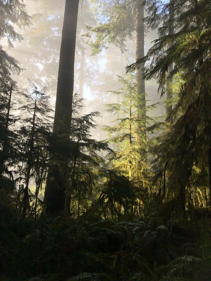 trees in Drift Creek Wilderness in Newport, Oregon