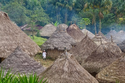 nipa huts between forest colombia zoom background