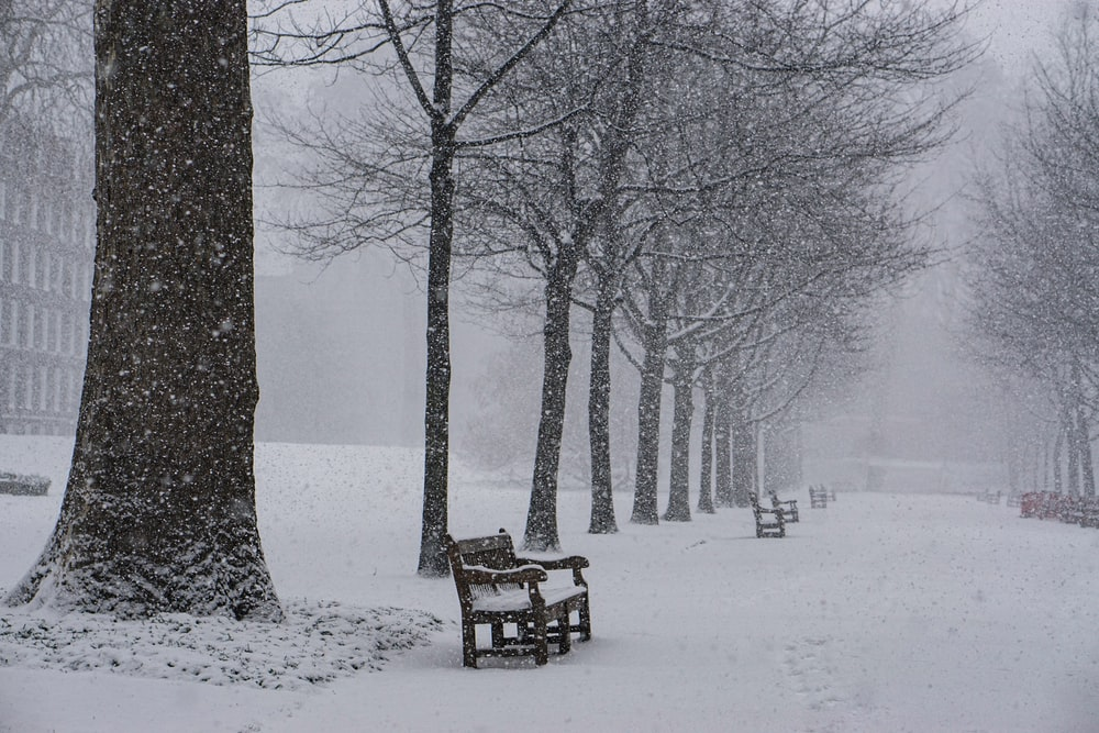 benches and trees covered with snow