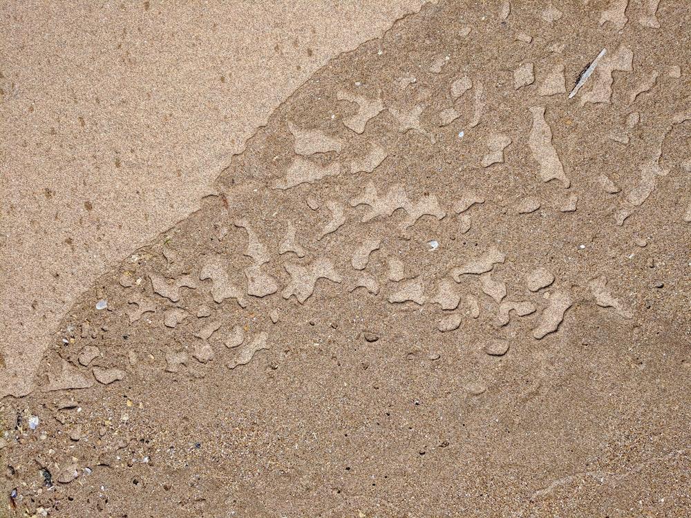brown seashore