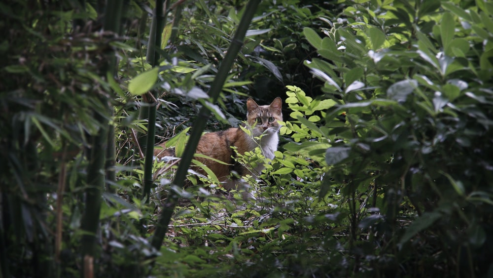 brown cat surrounded by green plants
