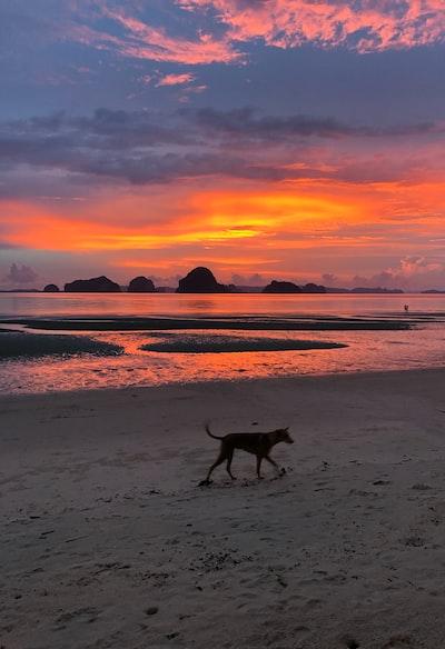 dog walking on seashore