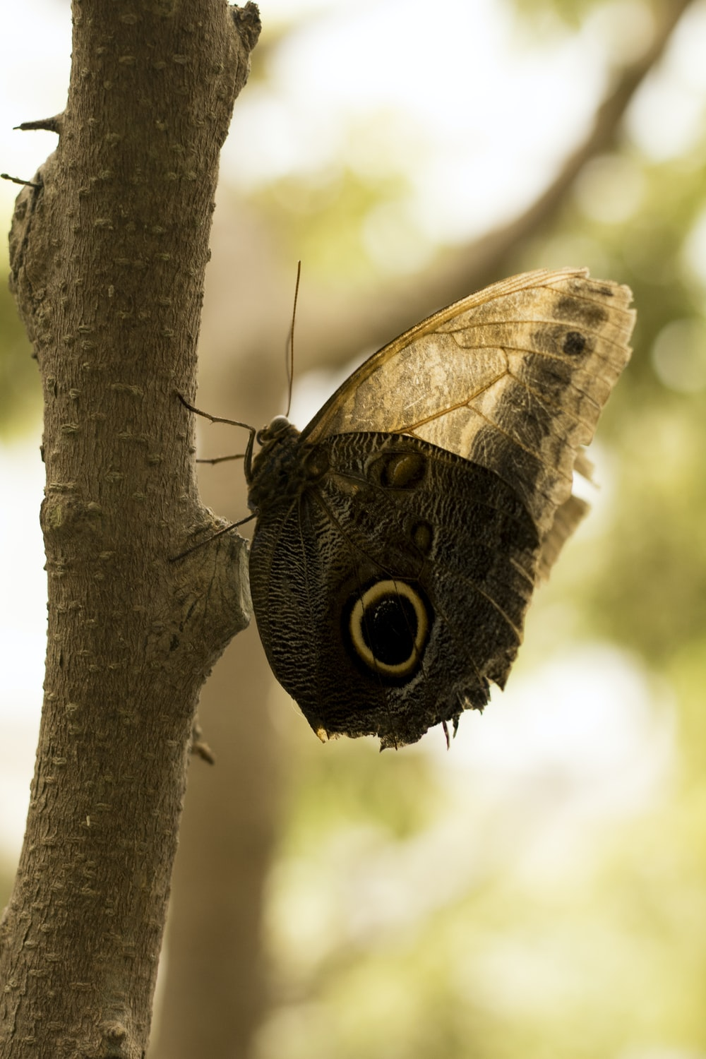 black and brown butterfly on tree branch
