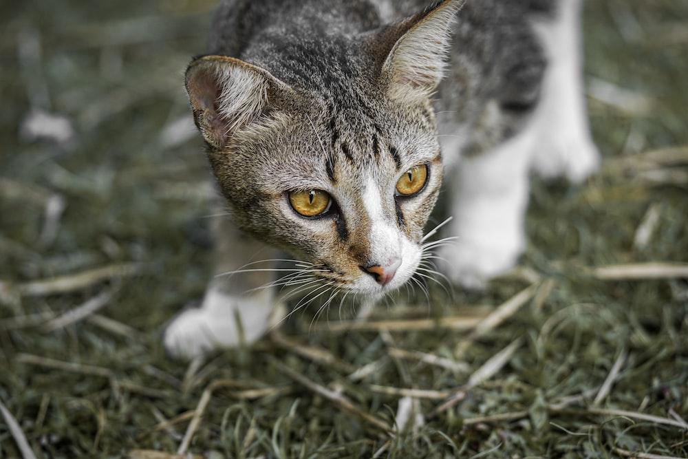 cat walking in green grass