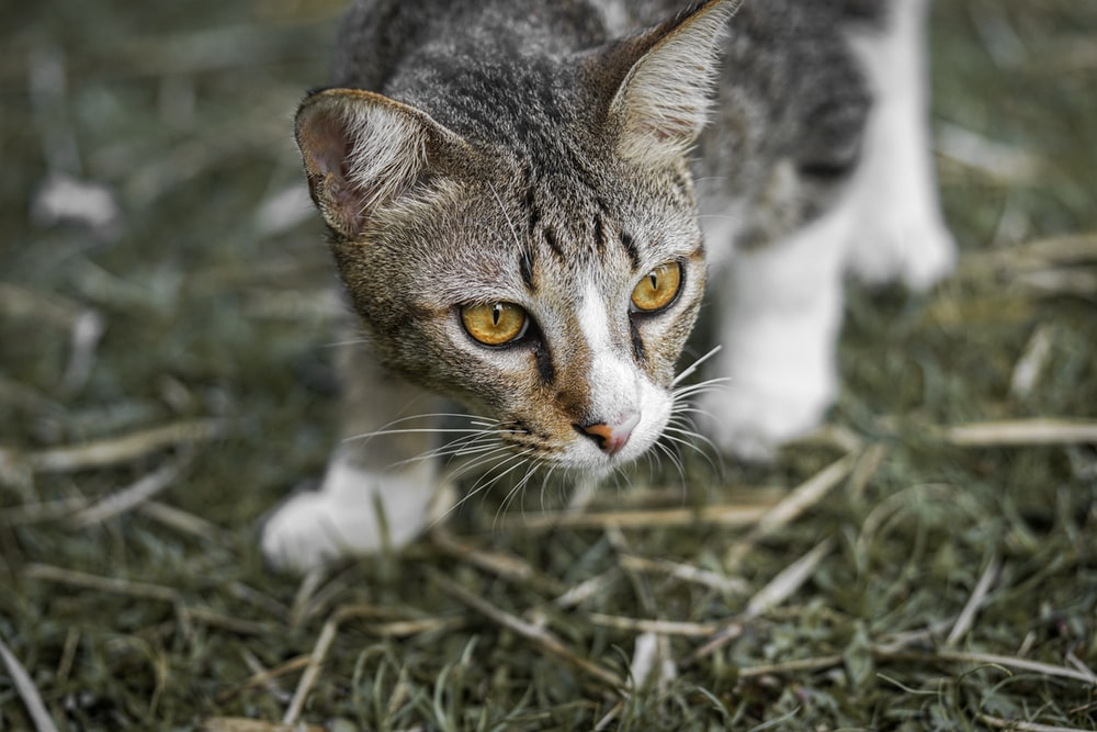 Unduh 76+  Gambar Kucing Lucu Download Imut Gratis
