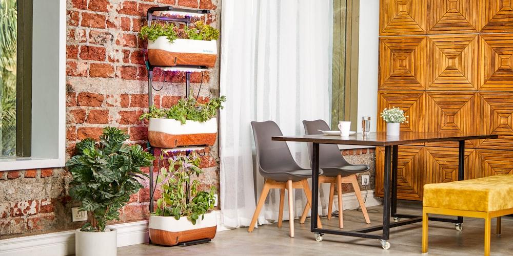 plant on black metal rack near table