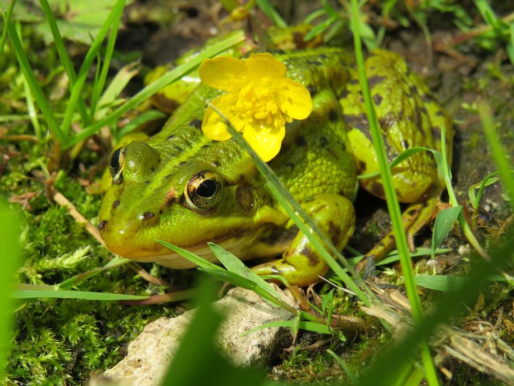 green frog on grass field