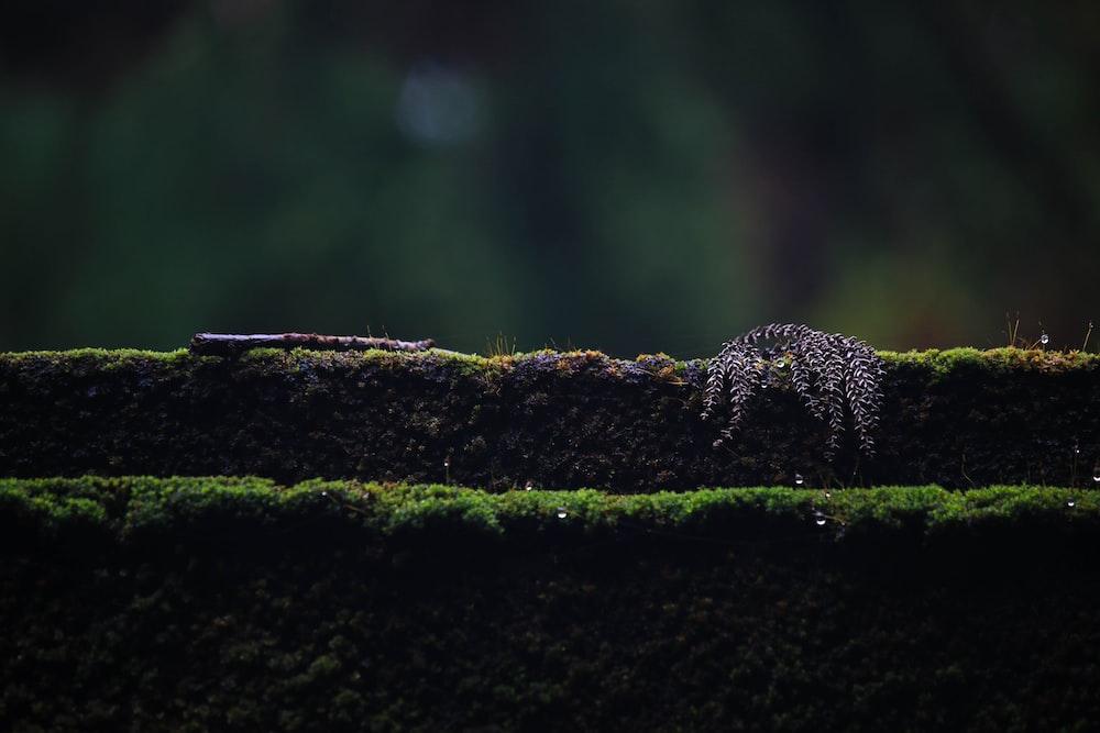 green moss concrete platform
