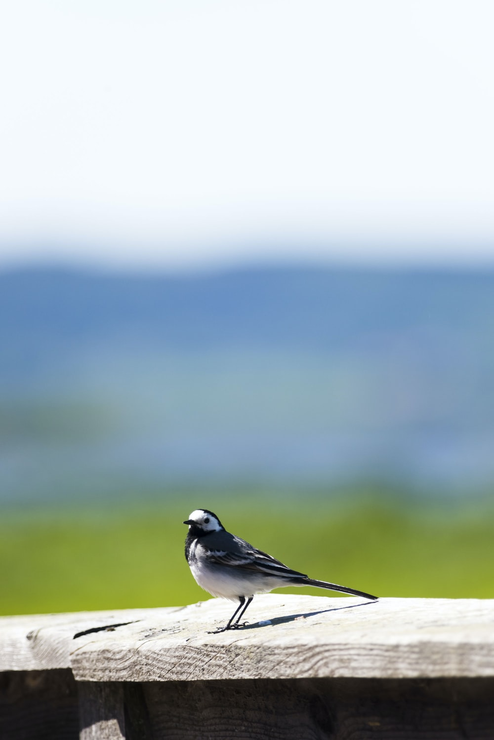 white and black bird photography
